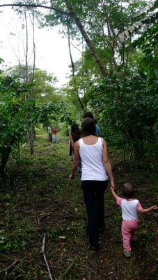 Community project - Juçara Palm and the protection of Atlantic Forest, Brazil